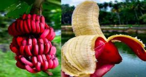 წითელი ბანანი, სასწაულმოქმედი ხილი, რომელიც უამრავ დაავადებას კურნავს