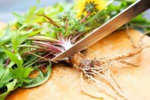 მცენარე, რომელმაც მეცნიერებიც კი გააოცა, უამრავი დაავადების მკურნალი სასწაულმოქმედი საშუალება