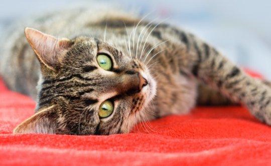 15 მიზეზი იმისა,  თუ რატომ უნდა გყავდეთ სახლში კატა