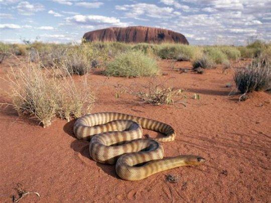 დაუჯერებელი ფოტოები, რომლის ნახვაც მხოლოდ ავსტრალიაშია შესაძლებელი!