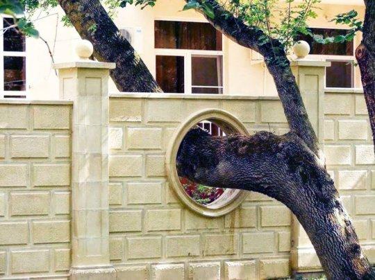 ასე უფრთხილდებიან ხეებს უცხოეთში