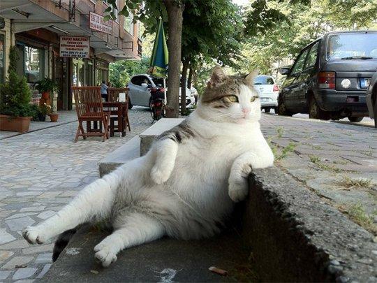 კატას ძეგლი დაუდგეს
