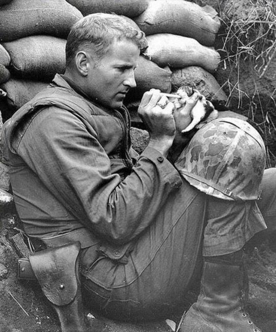 ამერიკელი ჯარისკაცი რძით კვებავს ბრმა კნუტს, კორეის ომის დროს