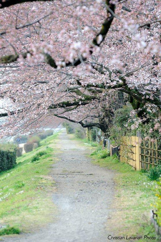 მდინარე კამოს ხეობა , კიოტო