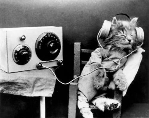 დღეს კატებიც კი სწავლობენ უცხო ენას