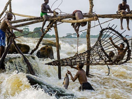 თევზაობა მდინარე კონგოზე