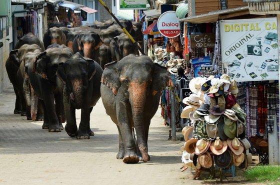 სპილოები