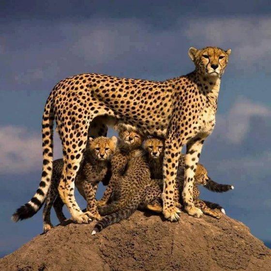 ოჯახური ფოტო.