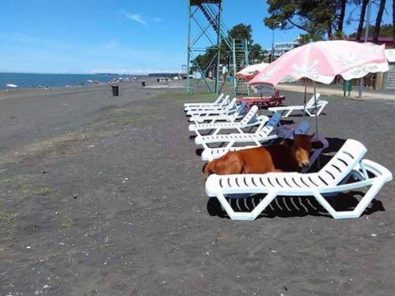 უჩვეული სტუმარი პლაჟზე