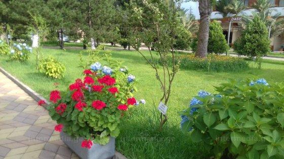 ყვავილები ლამაზები....