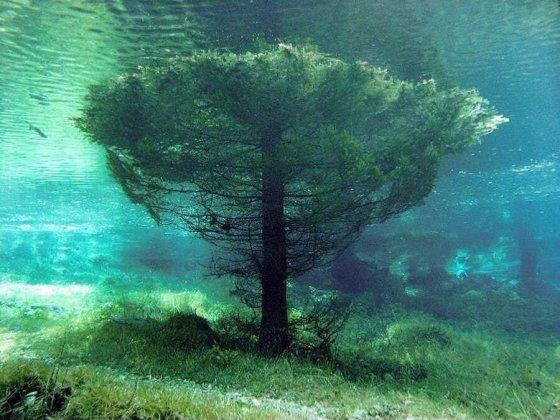 წყალქვეშა ხე ავსტრიაში