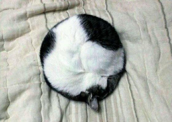 პერფექციონისტი კატა.