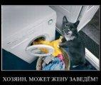 ექსპლოატაციას უწევენ კატას