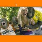 ამ მაიმუნს შეხედე რა დგეშია