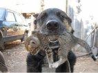 ძაღლმა კატა სიკვდილს გადაარჩინა