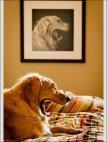 """""""საღოლ"""" რა ამ ძაღლს ასე ზუსტად მისადაგებული სურათი არ მინახია."""