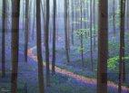 ჯადოსნური ტყე(ბელგია)