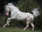 ულამაზესი ცხენი