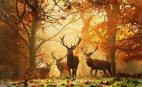 შემოდგომა ტყეში