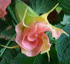 უცნაური და უიშვიათესი ყვავილები