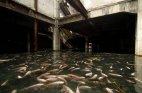 ტაილანდის ერთ-ერთ მიტოვებულ სავაჭრო ცენტრში თევზები გამრავლდნენ