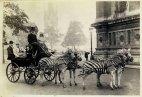 იშვიათი ისტორიული  ფოტო: ლონდონი, 1894 წელი