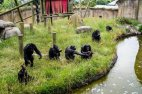 მაიმუნები