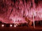 ლამაზი ხე