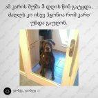 ჭკვიანი ძაღლი
