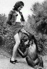 მაიმუნობს