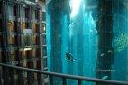 გიგანტური აკვარიუმი ლიფტის გარშემო, რომელიც 1500-ზე მეტ თევზს იტევს