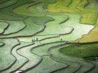 ბრინჯის ტერასები-ვიეტნამი