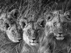 მეფე და მისი ოჯახი
