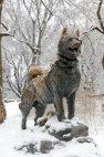 მარხილის ძაღლი ბალტო