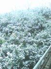 მარტმა თავისი საქმე მაინც გააკეთა, დაათოვა ციტრუსის ბაღებს