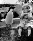 პატარა გოგონას რეაქცია პინგვინის დანახვაზე.