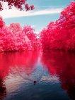ლამაზი ბუნება