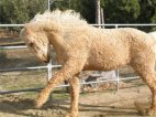ცხვარცხენი