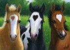 სიყვარულის ცხენები