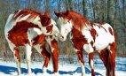 ულამაზესი ცხენები