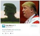 დიდ ბრიტანეთში აღმოაჩინეს ხე,რომელიც დონალდ ტრამპს ჰგავს