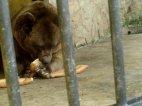 გორის ზოოპარკში დათვმა 60 წლის კაცი დაგლიჯა
