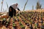 პალესტინელი ქალბატონი, რომელიც ჩამოყრილ ჭურვებს აგროვებს და მათ ქოთნებად იყენებს ყვავილებისთვის.