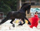 მოცეკვავე ცხენი