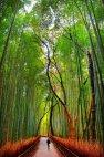 ბამბუკის ტყე