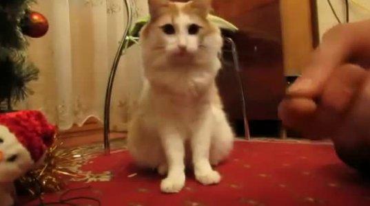 ასეთი  დამხმარე კატა ელექტრიკოსებისათვისაა ზედგამოჭრილი.