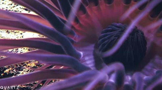 ოკეანის ფსკერზე, 1000-მდე, დღემდე უცნობი არსება აღმოაჩინეს