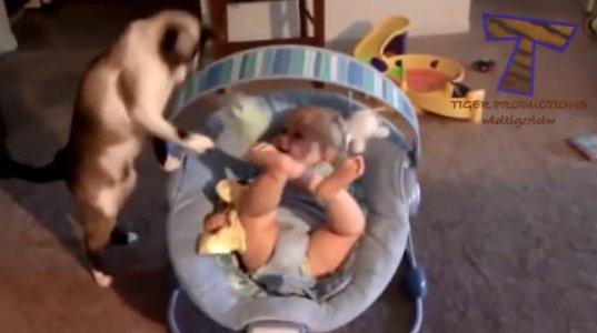კატები და ჩვილები