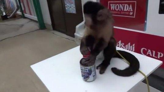 მაიმუნმა ფული სთხოვა წვენი რომ ჩამოეგდებინა და ხურდაც დაუბრუნა