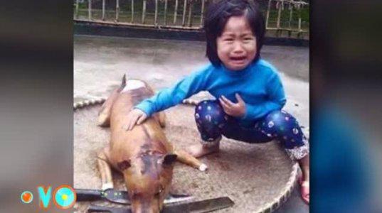 5 წლის გოგონამ თავისი ძაღლი, ძაღლების ხორცის ბაზარზე ამოიცნო